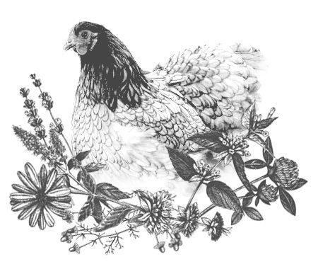 Bio Hühner Kräuter