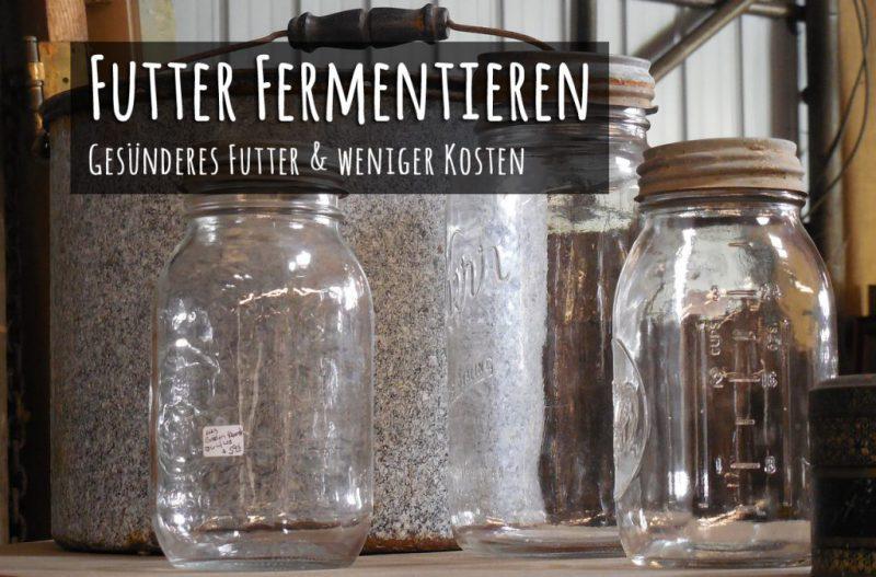 Hühnerfutter fermentieren – gesünderes Futter in 3 Tagen