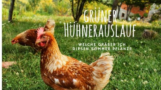 Wie kann ich den Hühnerauslauf begrünen – und dauerhaft grün halten?