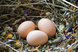 Blüten und Kräuter im Legenest wirken mit vorbeugend gegen Milbenbefall