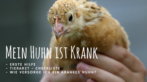 Mein Huhn ist krank – was kann ich tun?