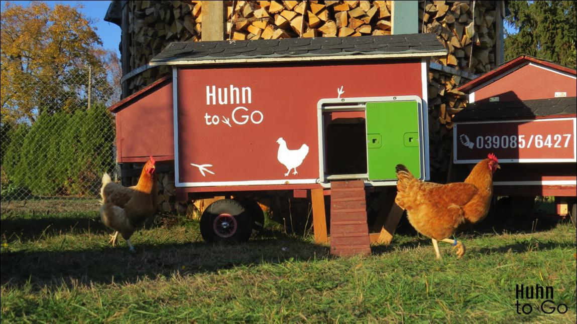 """Hühner mieten für Anfänger – mit """"Huhn to go"""" zur Hobbyhaltung"""